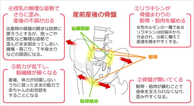 産前産後の骨盤の状態の図
